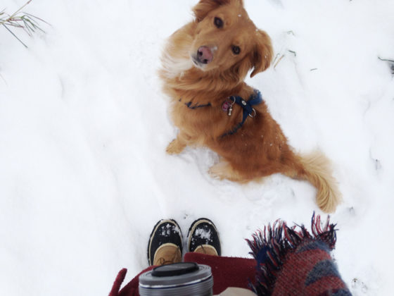 Boris-im-Schnee