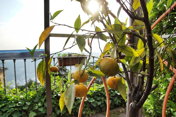 Zitronen in Italien