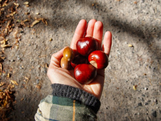 Herbst-KAstanien