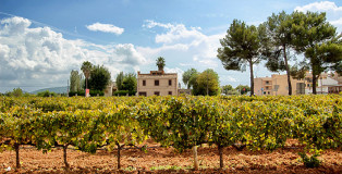 Mallorca_Geheimtipps_Weinfelder-und-Straße