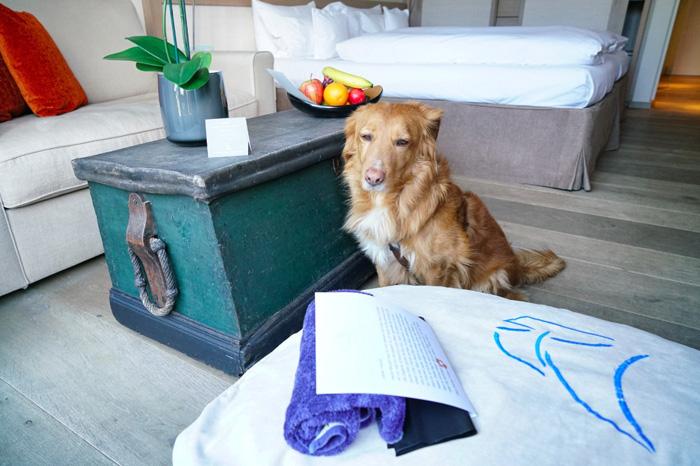 boris hotel mit hund faehrhaus