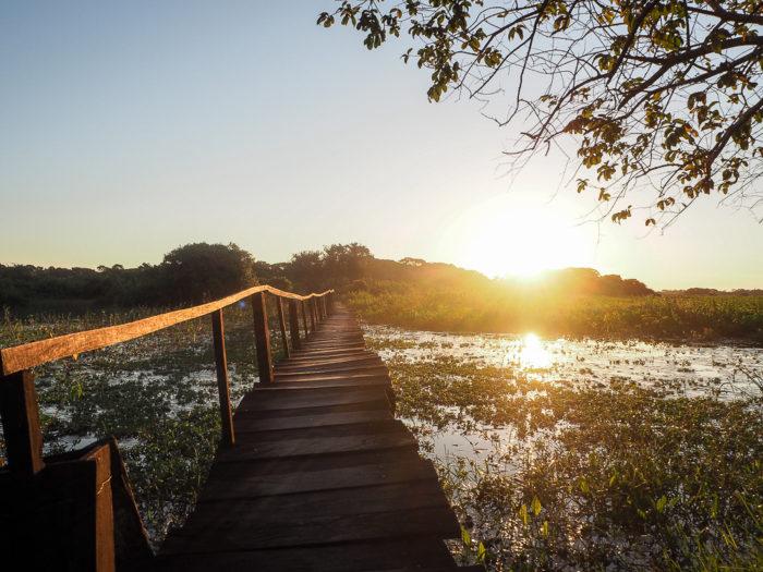 Naturparadies Pantanal