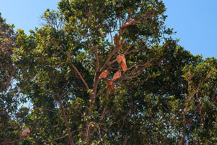 laura-drosse-westaustralien-tom-price-kakadoo