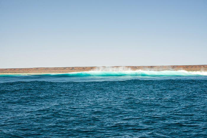 ningaloo-reef-westaustralien-laura-drosse