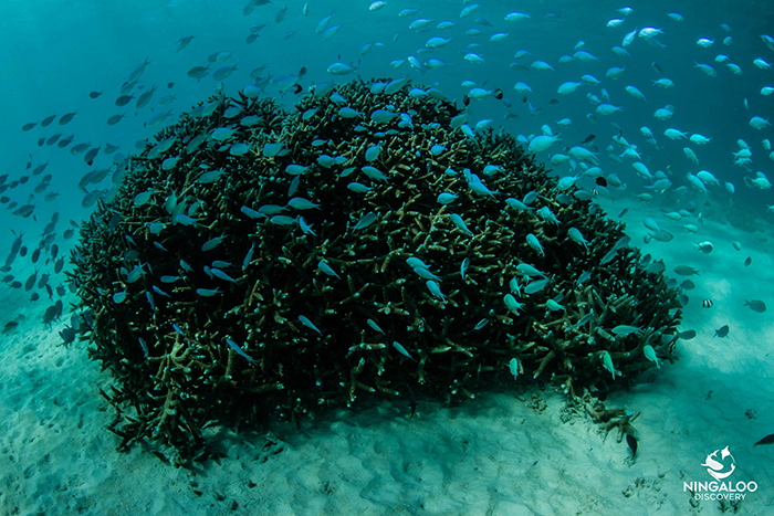 ningaloo-reef-western-australia