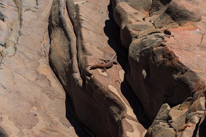 Eidechse-Spa-Pool-Westaustralien
