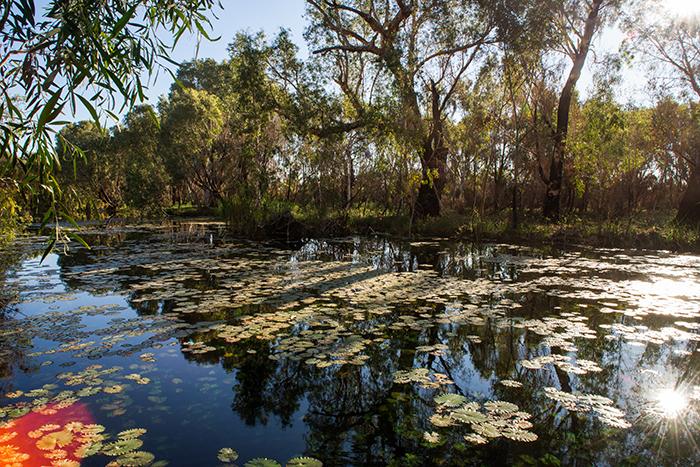 Jirndawurranhn-Millstream-Westaustralien