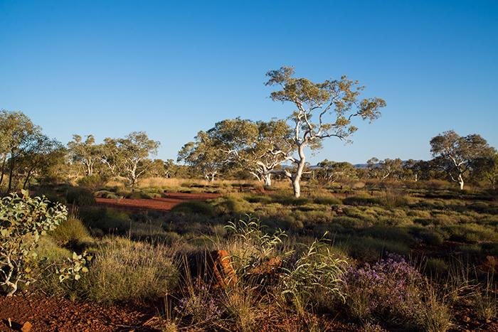 laura-drosse-westaustralien-karijini-snappy-gum