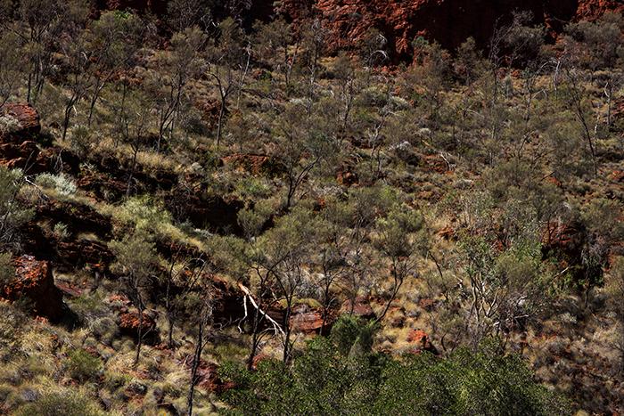 laura-drosse-westaustralien-natur-landschaft