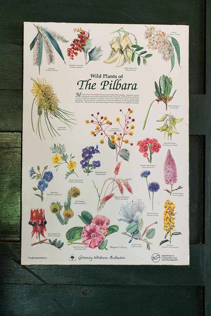 laura-drosse-wildblumen-westaustralien