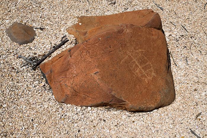 petroglyphen-westaustralien-schildkröte