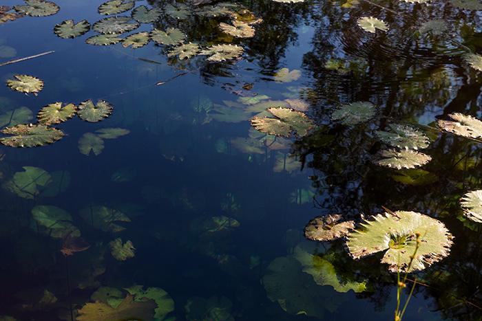 Unterwasserstadt-Millstream-wetlands