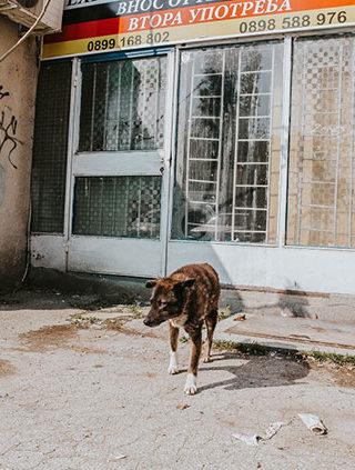 Streuner in Bulgarien