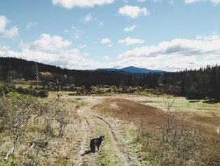 Weite Felder Canada