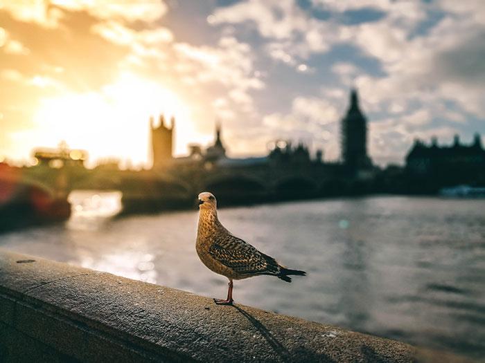 Insider Tipps London