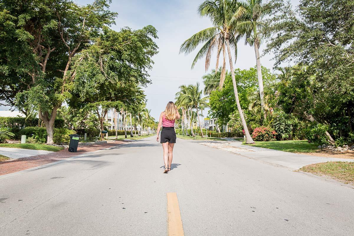 Palmenallee in Naples, Florida