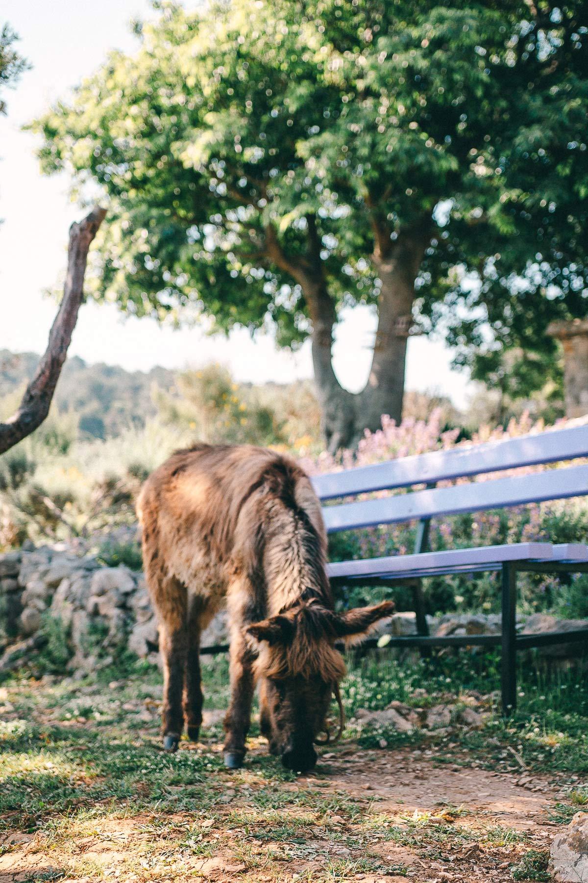 So süß! Ein kleiner Esel im Kräutergarten