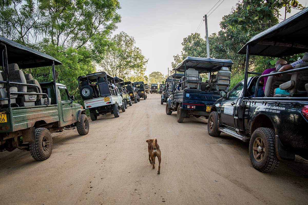 Autoschlange vorm Udawalawe National Park