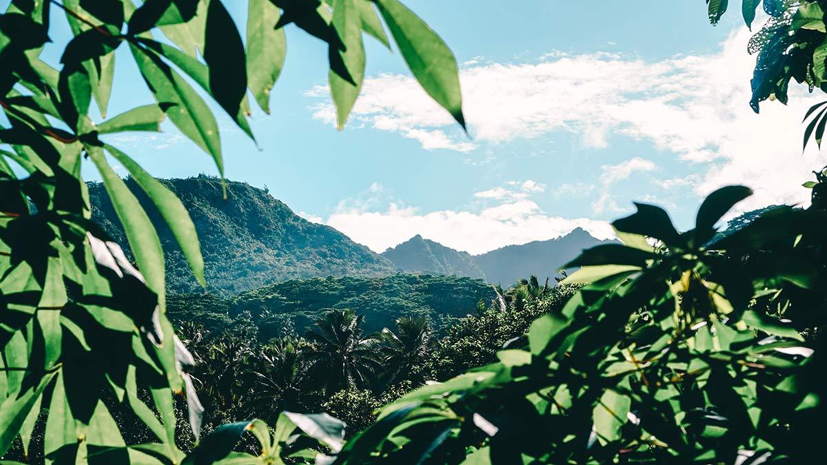 Bergkette Rarotonga Eco Cylce Tour