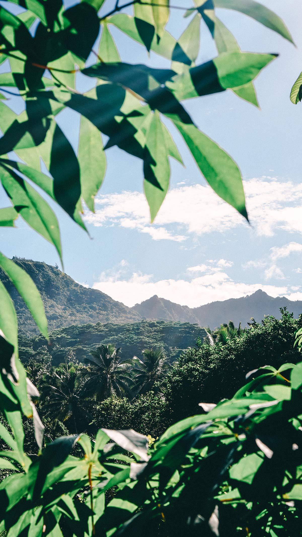 Eco Cycle Tour Rarotonga Landschaft