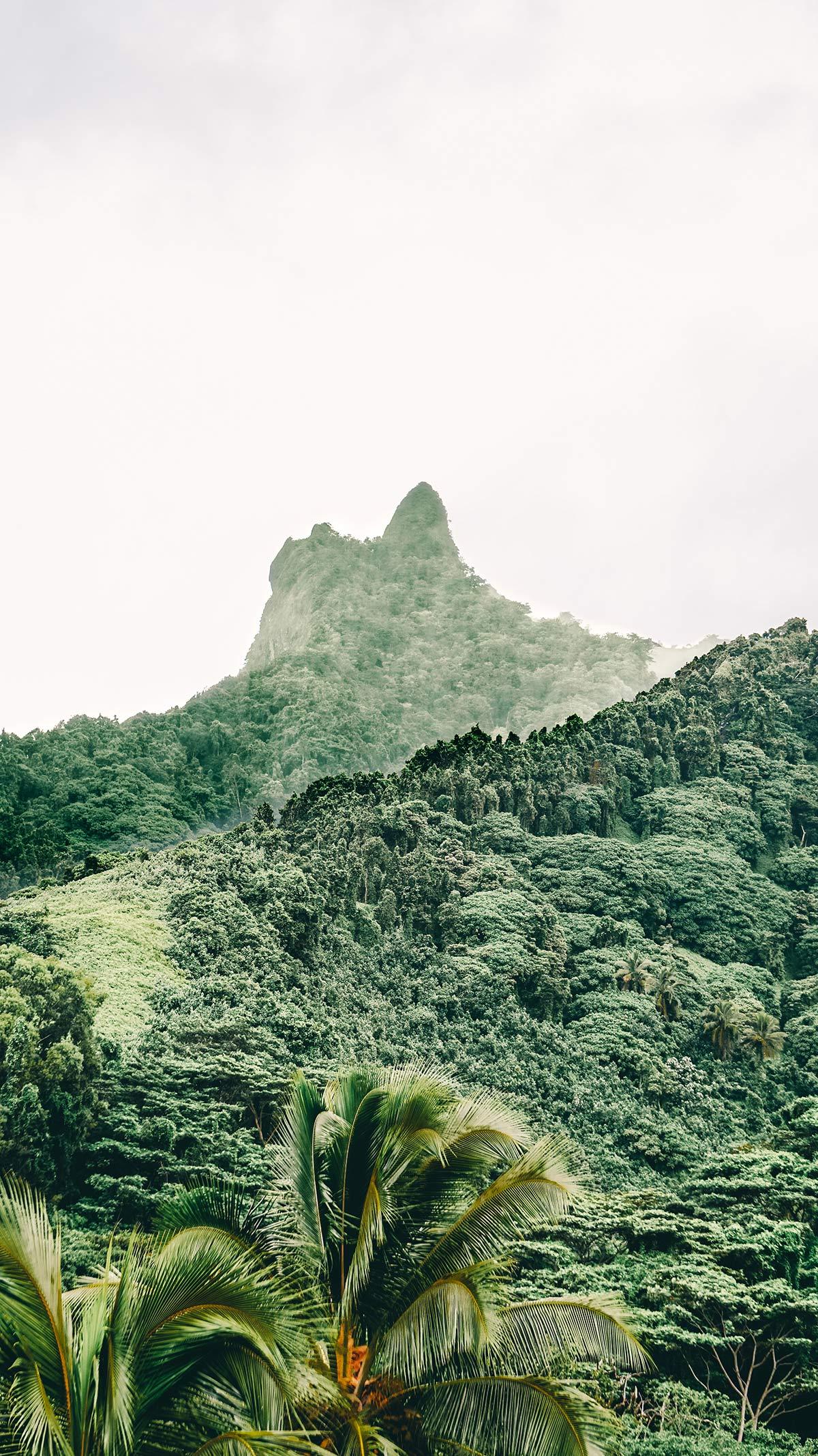 Rarotonga Landschaft Regenwald