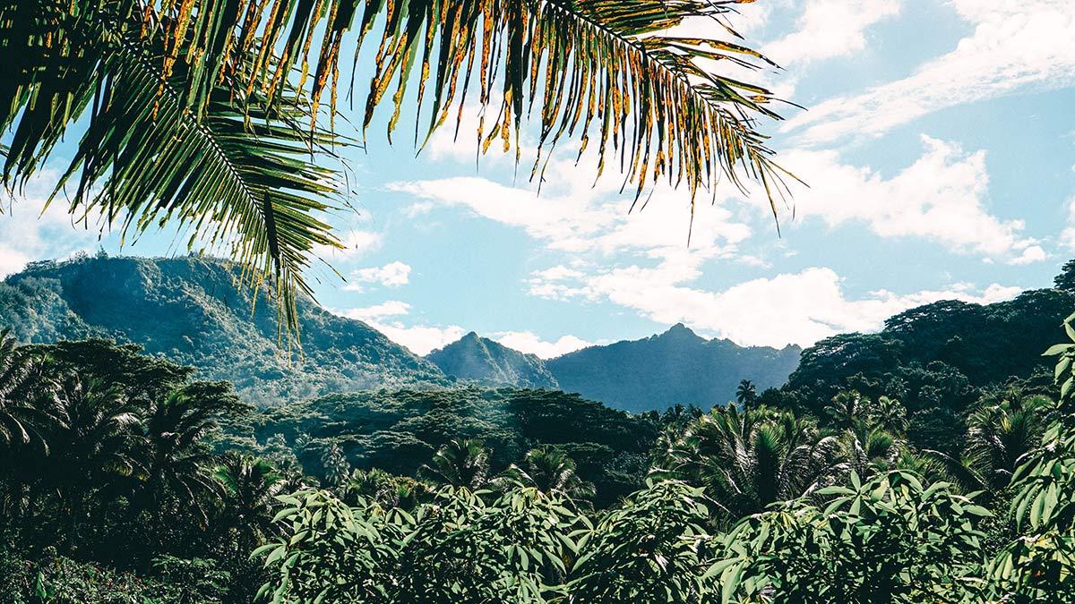 Rarotongas Landschaft waehrend der Eco Cycle Tour
