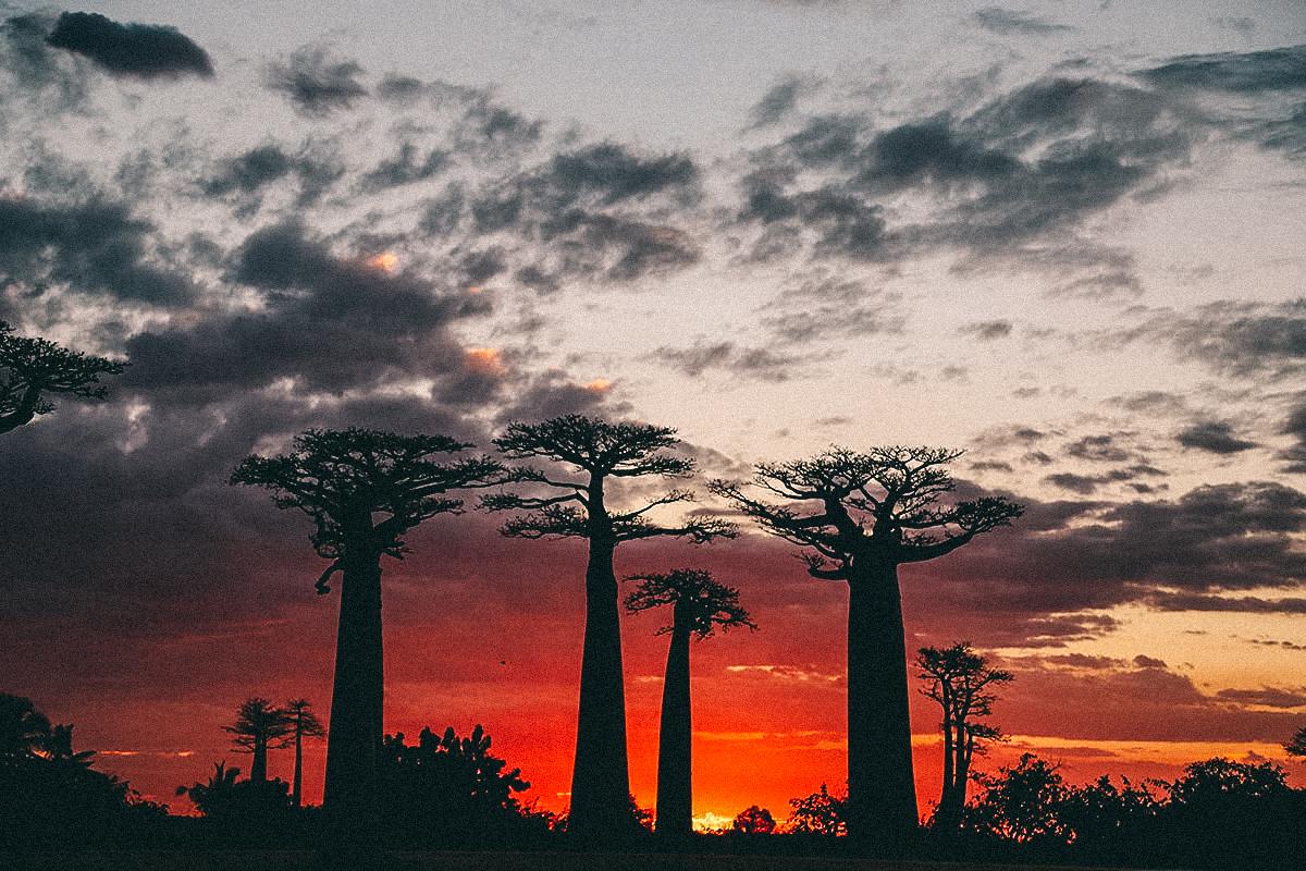 Baobab Allee zum Sonnenuntergang