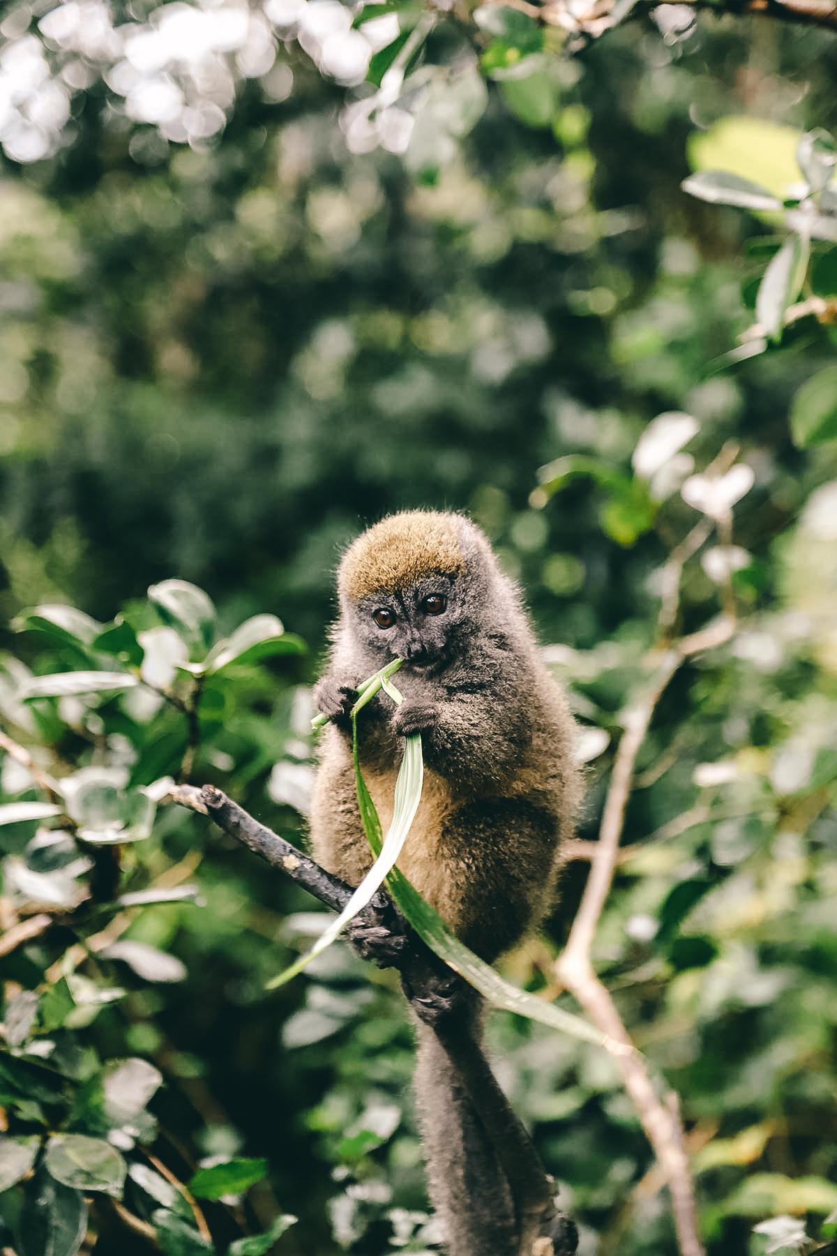 Dschungeltour Madagaskar
