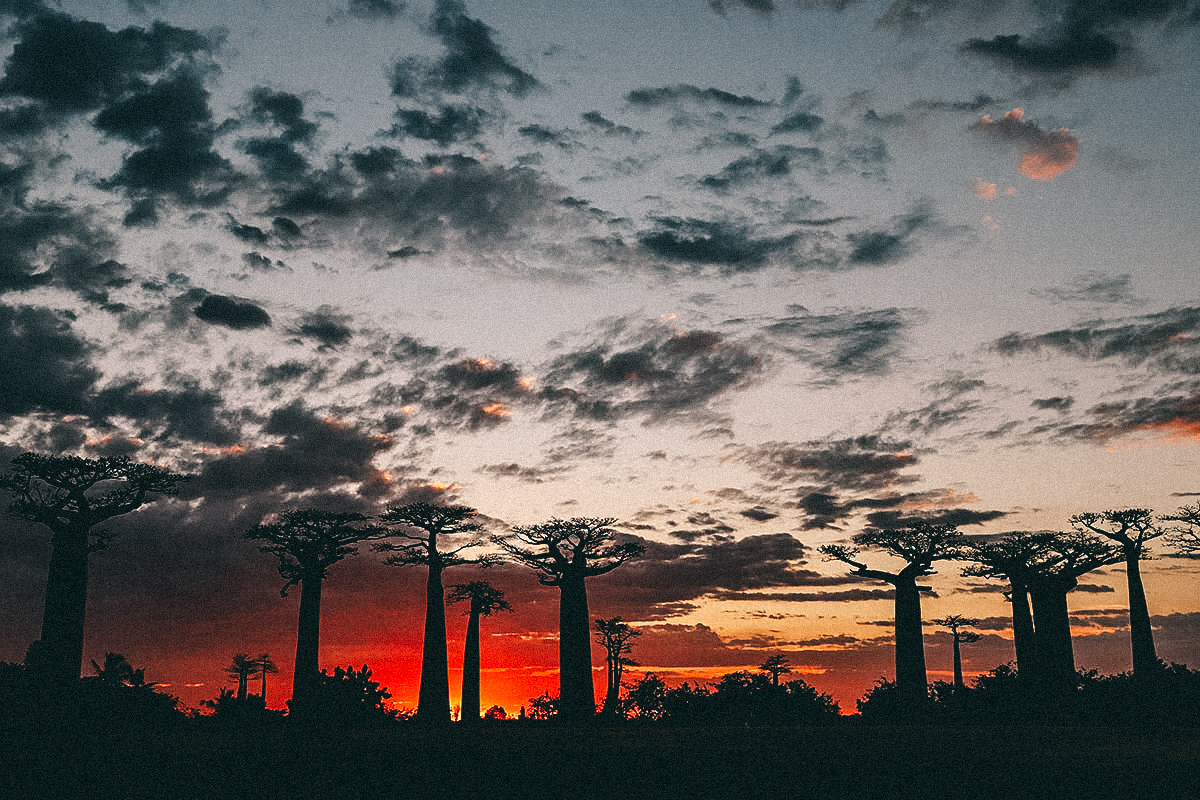 Sonnenuntergang Baobab Allee