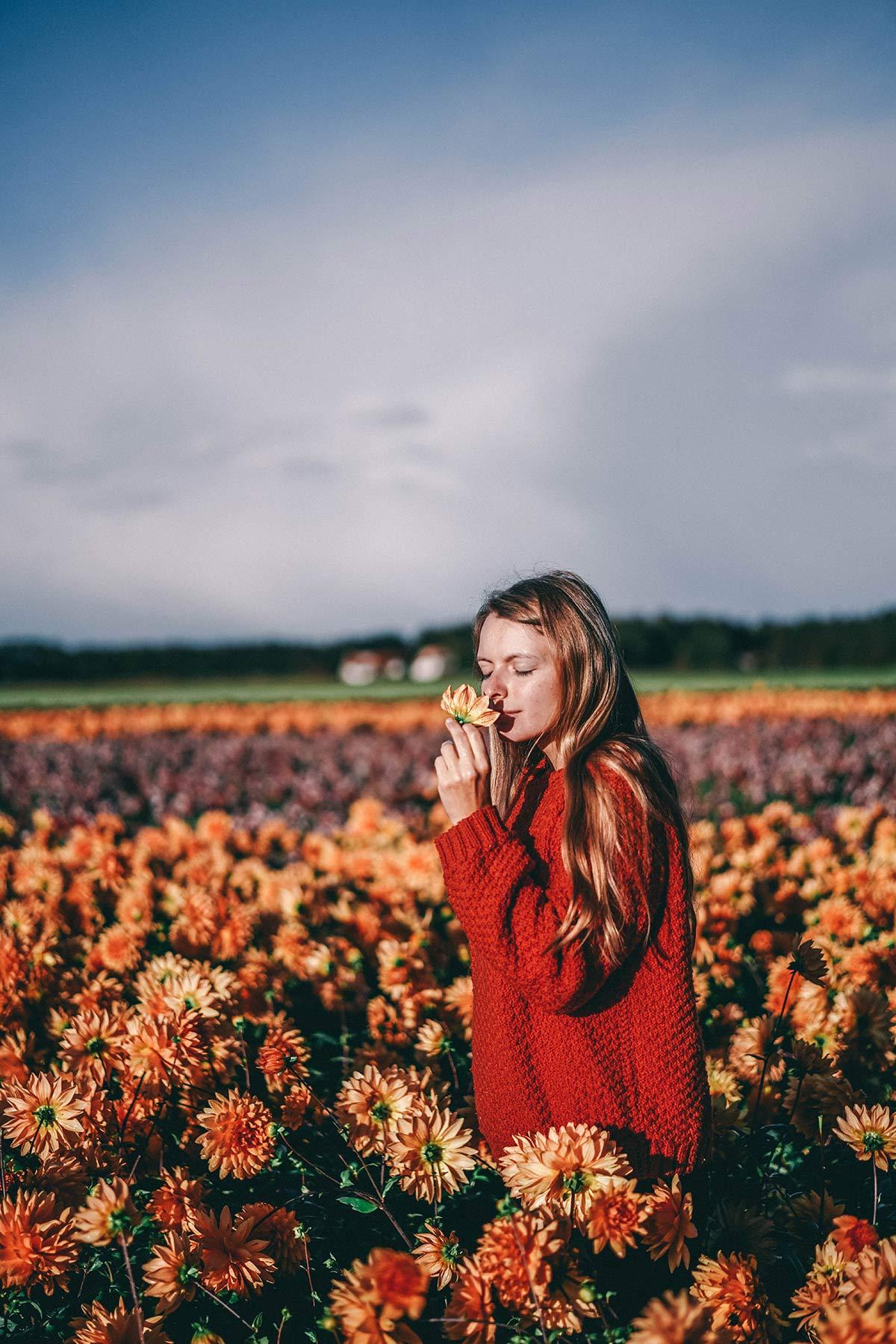 Christine Neder Holland Texel Blumenwiese