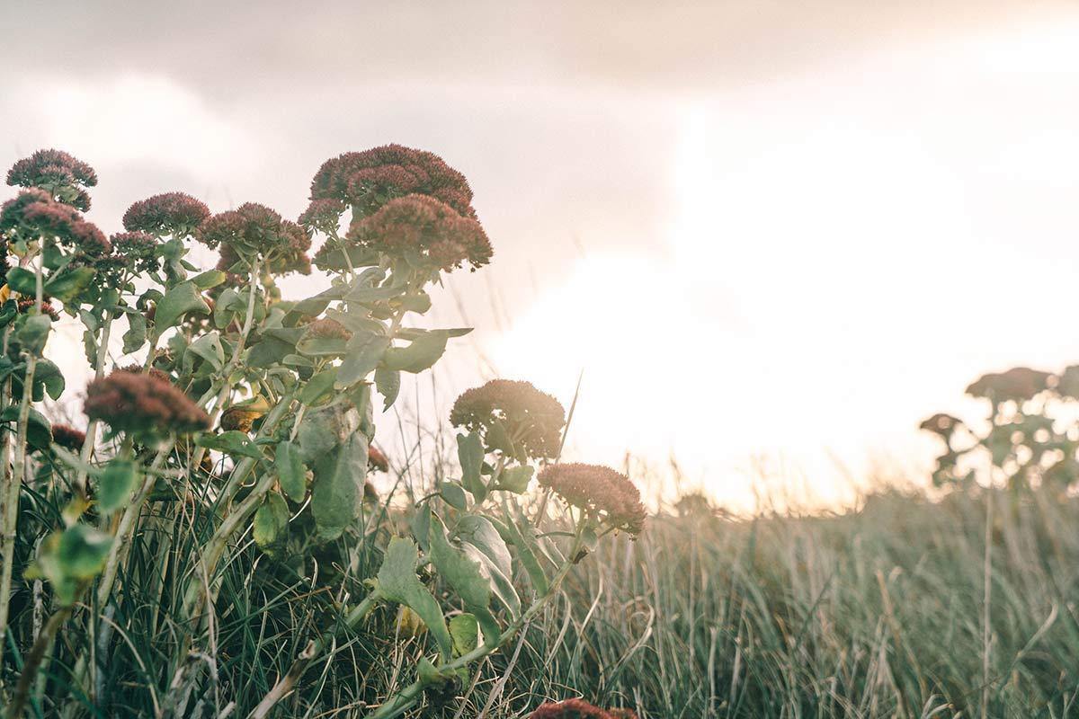 Pflanzen Nationalpark de Hors