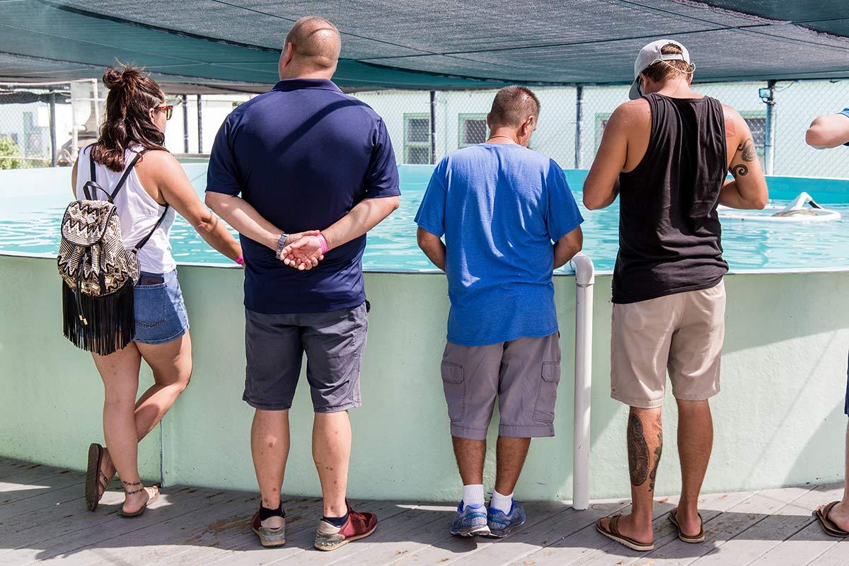 Schildkroetenkrankenhaus Florida Keys Besucher