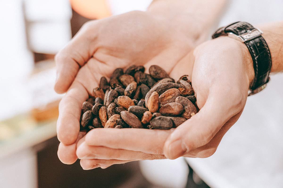Maestrani's Chocolarium Kakaobohnen