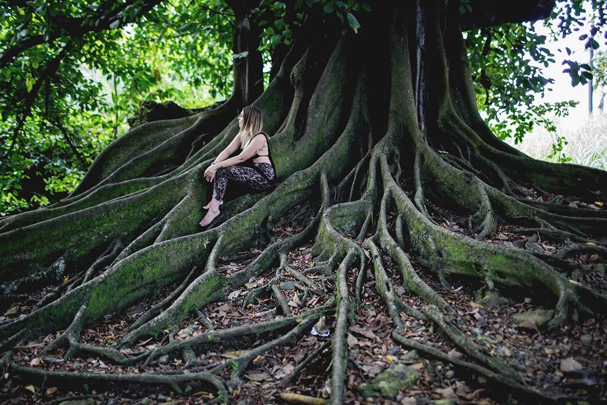 Baum Habitation Clement Martinique Botanischer Garten