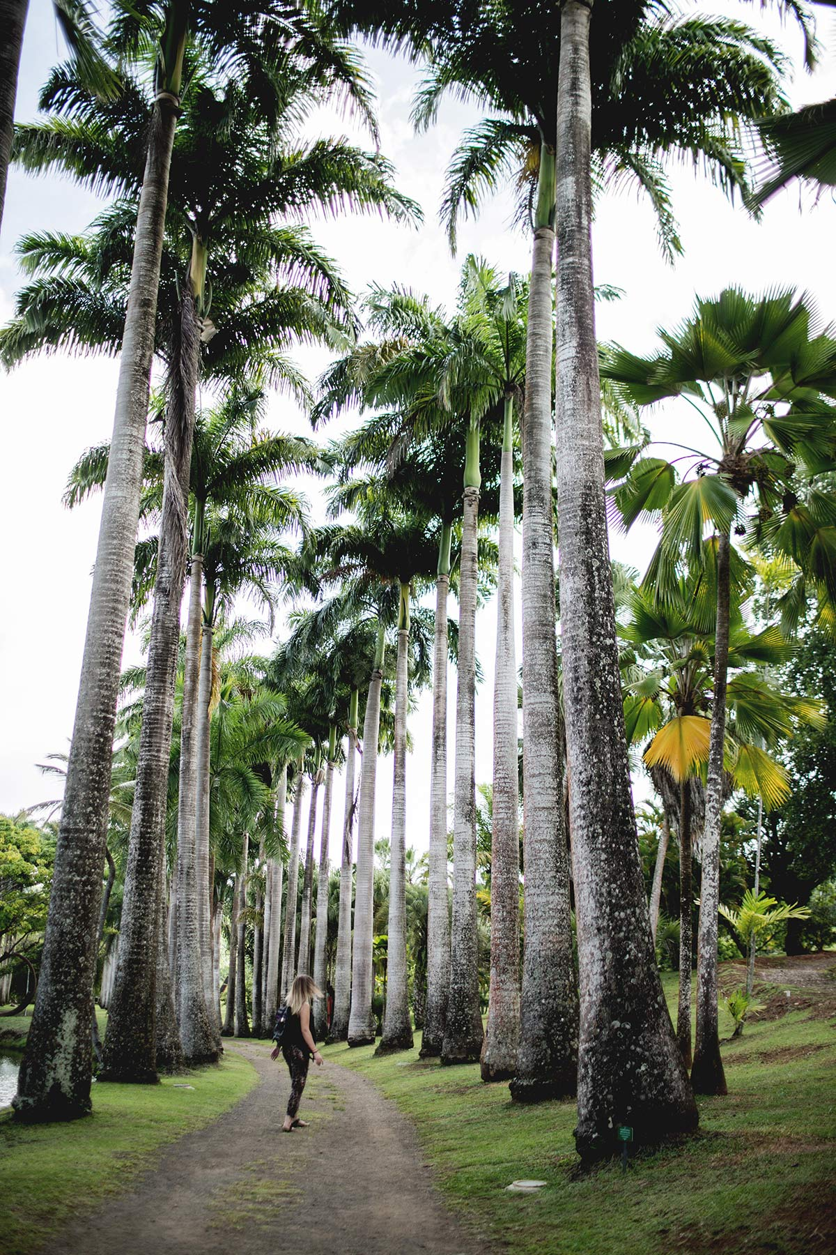 Palmenreihe botanischer Garten