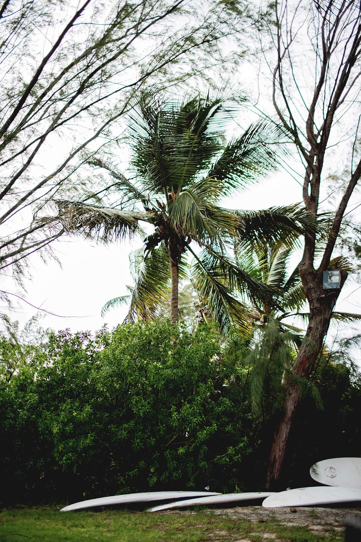Surfen auf Martinique
