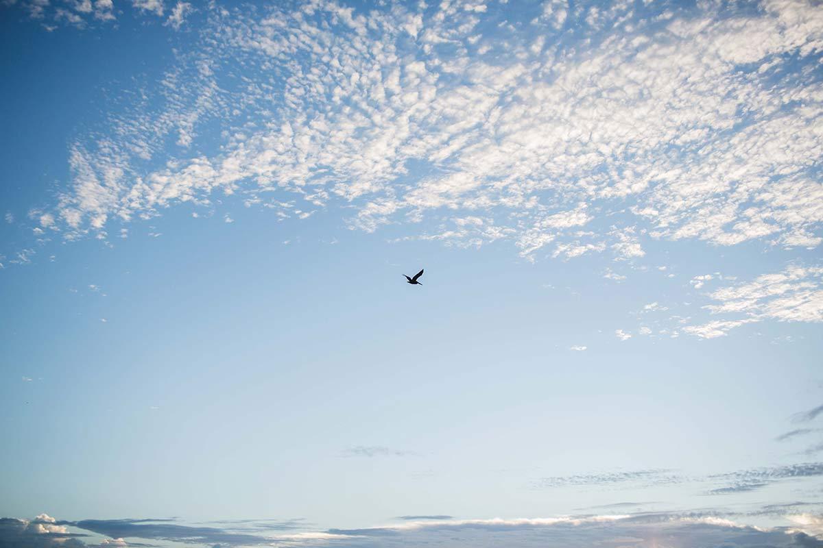 Vogel im blauen Himmel