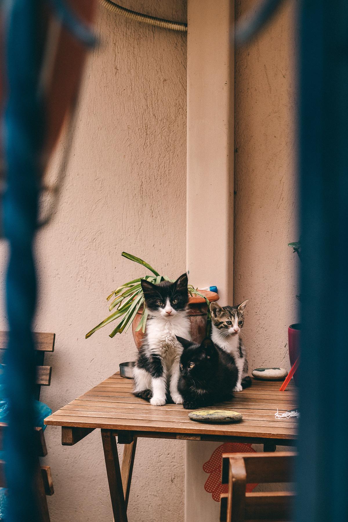 Chalkidiki Katze Griechenland