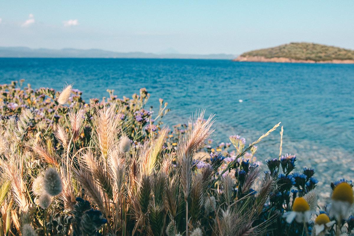 Chalkidiki Pflanzen Griechenland