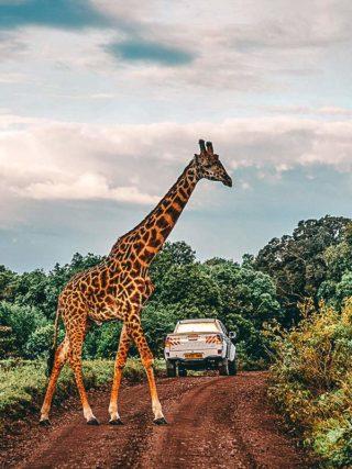 Arusha Nationalpark