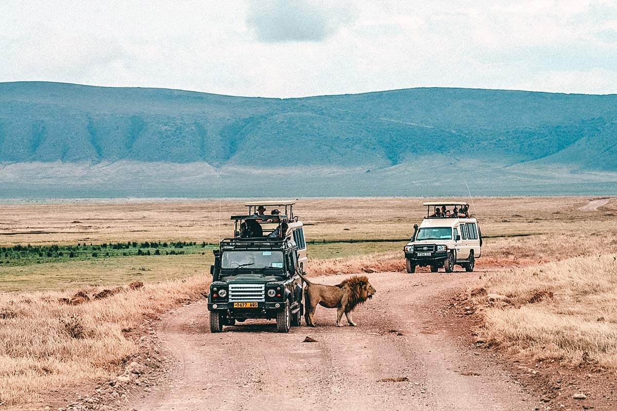 Ngorongoro Nationalpark Guide