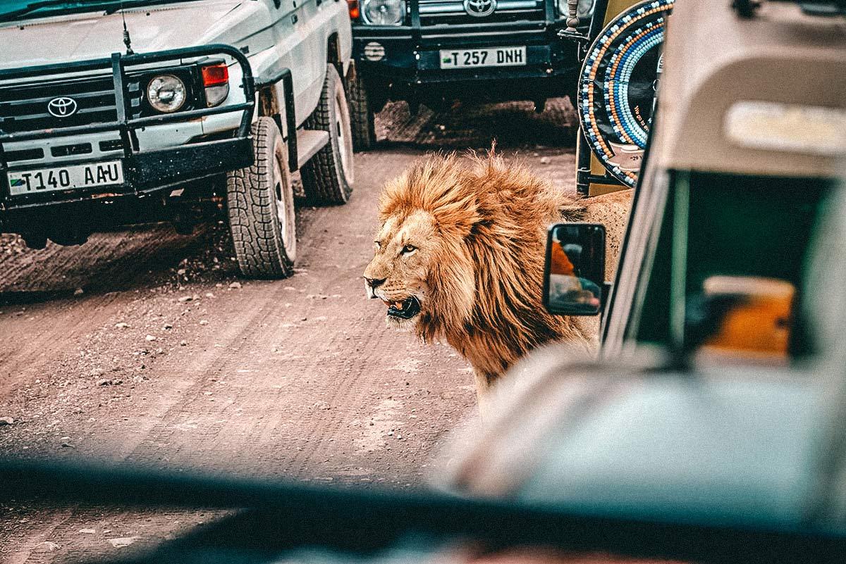 Ngorongoro Nationalpark Tansania