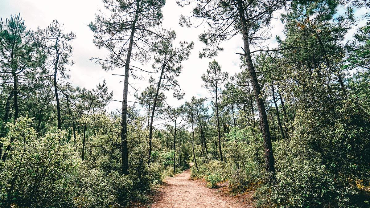 Saint Jean Spaziergang durch Wald