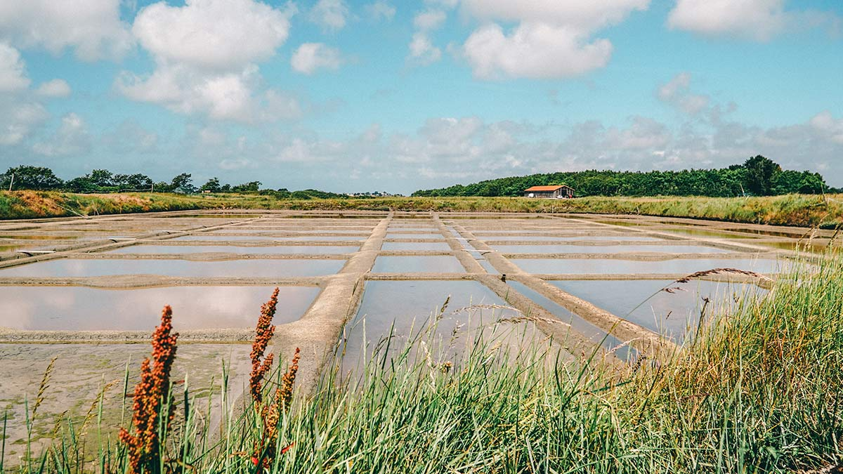 Salzgarten Mesquer Saline