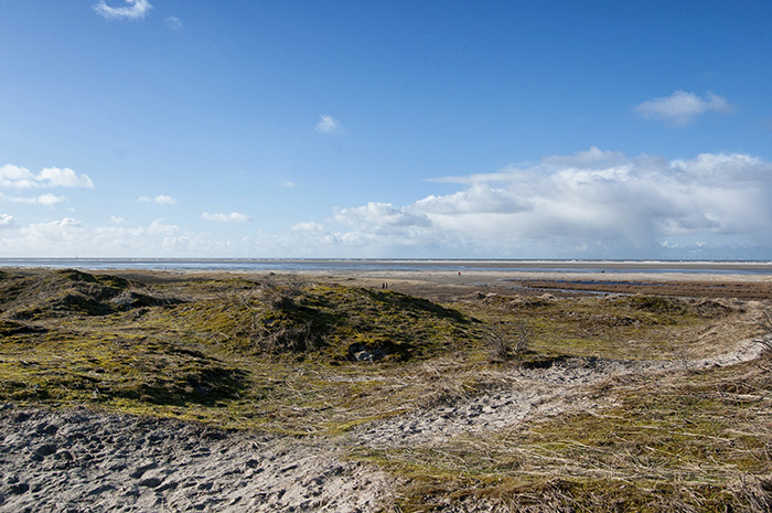 borkum strand gruen