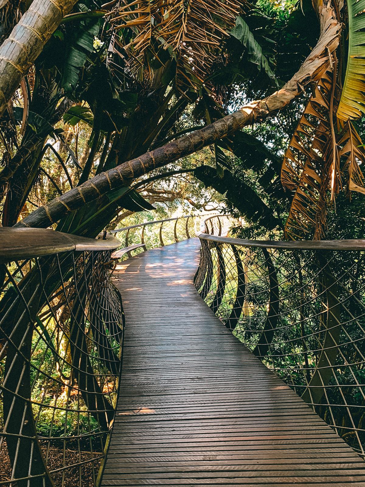 Botanischer Garten in Kapstadt II