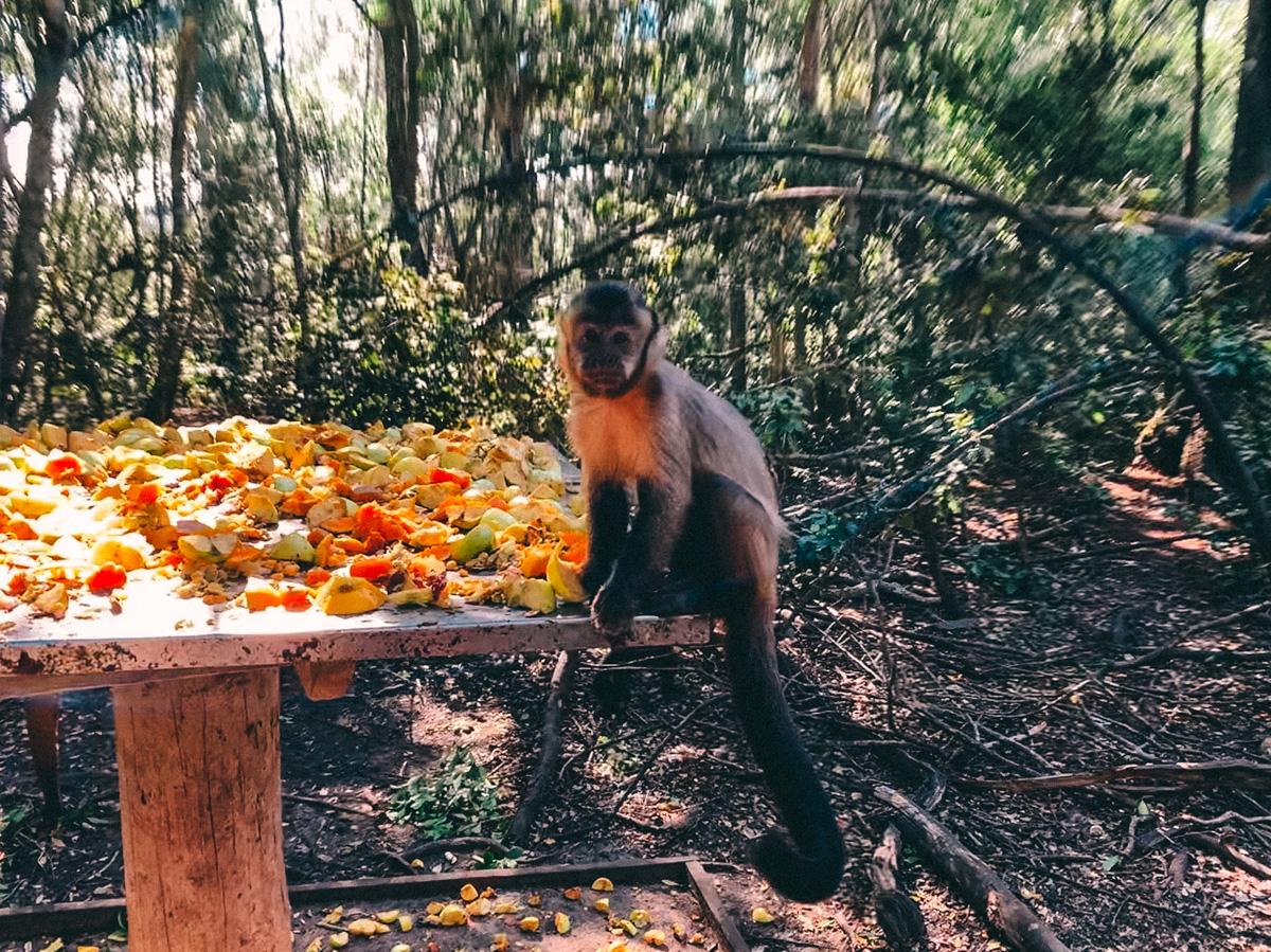 Monkeyland nahe Plettenberg Bay