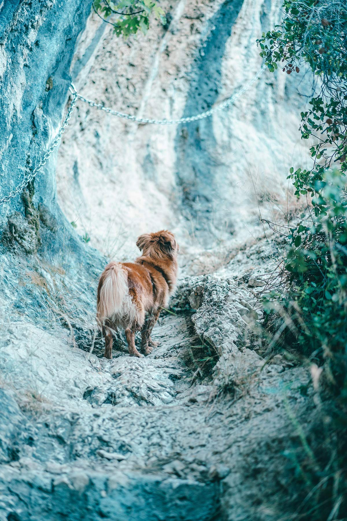 hund wanderung wandertour st remy und lac peirou