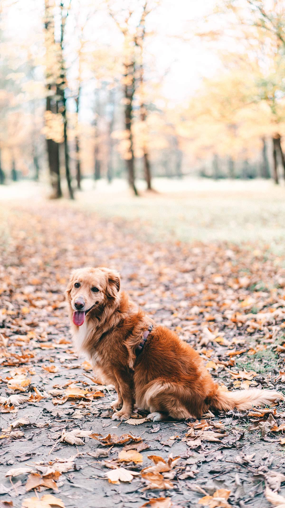 Englischer Garten mit Hund