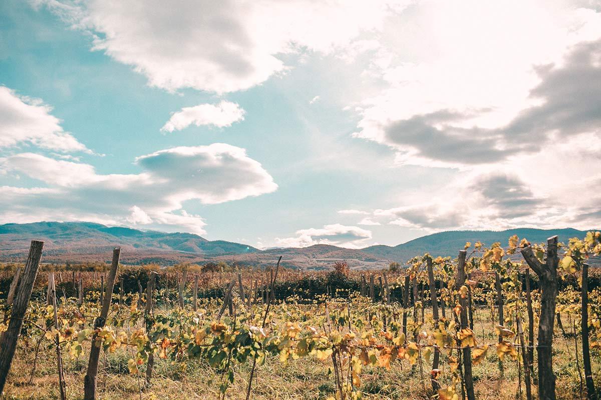 Georgies Landschaft mit Weinanbaufeld